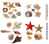 conch starfish he shell | Shutterstock . vector #776420233