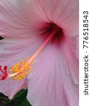 Pink Hibiscus Interior With...