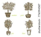 set of fruit trees in pots.... | Shutterstock .eps vector #776594587