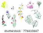 tender delicate ink flowers set ... | Shutterstock . vector #776610667