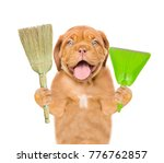 cleaning concept. dog holds...   Shutterstock . vector #776762857