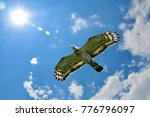 oriental honey buzzard  pernis... | Shutterstock . vector #776796097