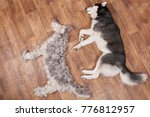 dog lies next to the figure dog ... | Shutterstock . vector #776812957