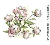 peony flowers. hand drawn... | Shutterstock .eps vector #776885053