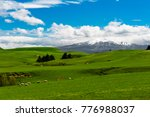 beautiful landscape of the new... | Shutterstock . vector #776988037