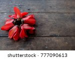bombax ceiba red flower | Shutterstock . vector #777090613