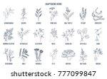 adaptogen herbs. hand drawn... | Shutterstock .eps vector #777099847