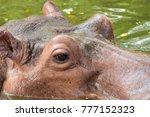 close up of hippopotamus's face ... | Shutterstock . vector #777152323