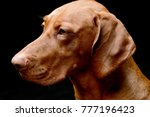 portrait of an adorable... | Shutterstock . vector #777196423