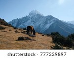 a horse with beautiful mountain ... | Shutterstock . vector #777229897