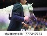 arabian horse world... | Shutterstock . vector #777240373