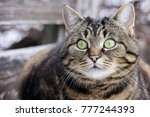 a curious look from big cat's... | Shutterstock . vector #777244393