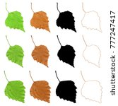 birch leaf traced in color ... | Shutterstock .eps vector #777247417