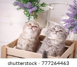 couple of very surprised cats... | Shutterstock . vector #777264463