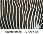 zebra | Shutterstock . vector #77729542