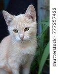 Stock photo funny cat portraits 777357433