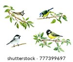 watercolor drawing of tit birds ... | Shutterstock . vector #777399697