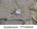 dainty sea shells washed up on... | Shutterstock . vector #777430663