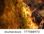 photo forest blur background....   Shutterstock . vector #777588973