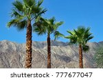 palm trees at palm springs   Shutterstock . vector #777677047