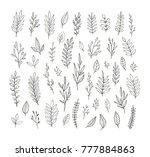 hand drawn vintage botanical... | Shutterstock .eps vector #777884863