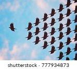 one bird flying the opposite...   Shutterstock . vector #777934873