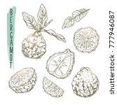 sketch of bergamot elements.... | Shutterstock .eps vector #777946087