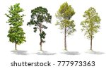 tree on white background   Shutterstock . vector #777973363