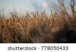 dense thickets of bush branches ... | Shutterstock . vector #778050433