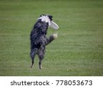 a dog playing fetch in a local...   Shutterstock . vector #778053673