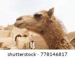 close up portrait of a cute... | Shutterstock . vector #778146817