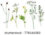 set of watercolor and ink... | Shutterstock . vector #778166383