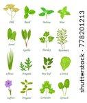 popular culinary herbs... | Shutterstock .eps vector #778201213