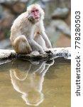 jigokudani monkey park  ... | Shutterstock . vector #778280503