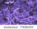 ultraviolet abstract background ... | Shutterstock . vector #778282453