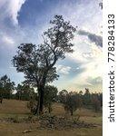 weather beaten tree with fallen ...   Shutterstock . vector #778284133