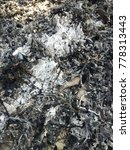 Small photo of Pile of ashes after the fire went out. Ash texture.