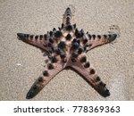 starfish shell on beach in... | Shutterstock . vector #778369363