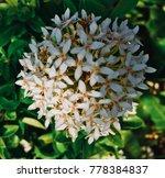 white spike flower | Shutterstock . vector #778384837