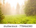 nice forest. sunshine. green... | Shutterstock . vector #778466383