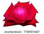 red rose isolated on white... | Shutterstock . vector #778507687