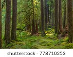 ancient groves nature trail... | Shutterstock . vector #778710253