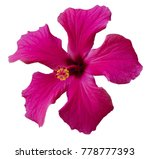 bright pink large flower of... | Shutterstock . vector #778777393