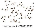 flying bird asian golden weaver | Shutterstock . vector #778792753