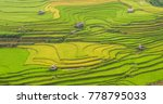 Terraced Rice Field With...