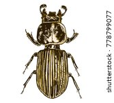 color insects beetle bug.... | Shutterstock .eps vector #778799077