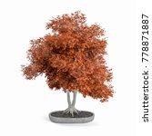 decorative japanese maple tree... | Shutterstock . vector #778871887