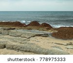 Seaweed Washed Ashore After A...
