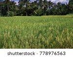 rice plantations  java ... | Shutterstock . vector #778976563