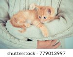 Stock photo cute little red kitten is sitting on his hands kitten in the hands red haired kitten soft tone 779013997